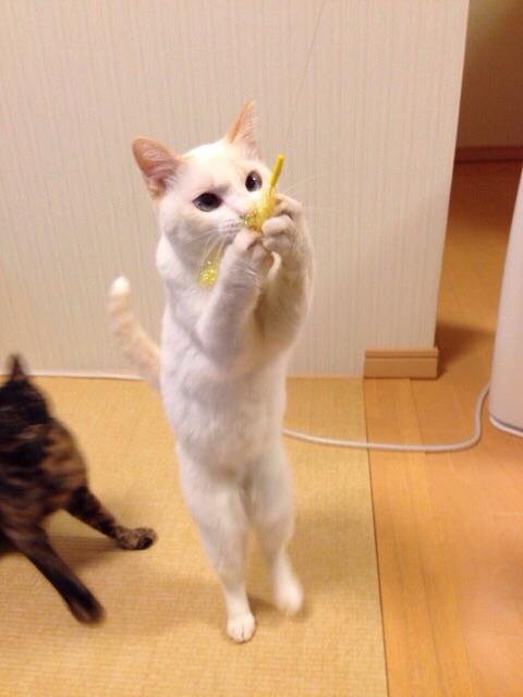 f:id:akiyochan15:20141021130310j:image:w389
