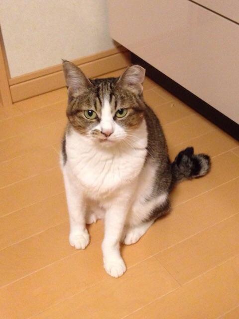 f:id:akiyochan15:20141107124512j:image:w389