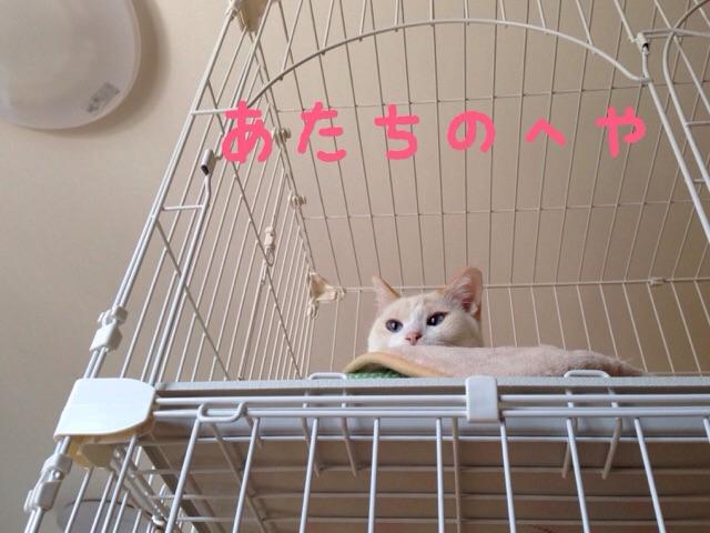 f:id:akiyochan15:20141125125905j:image:w518