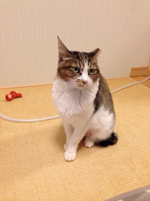 f:id:akiyochan15:20141125130008j:image:w389