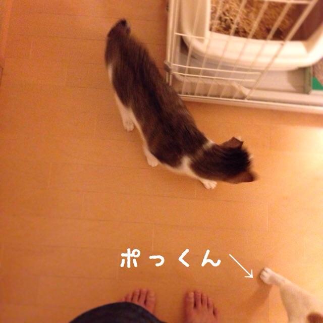f:id:akiyochan15:20141201023452j:image:w400