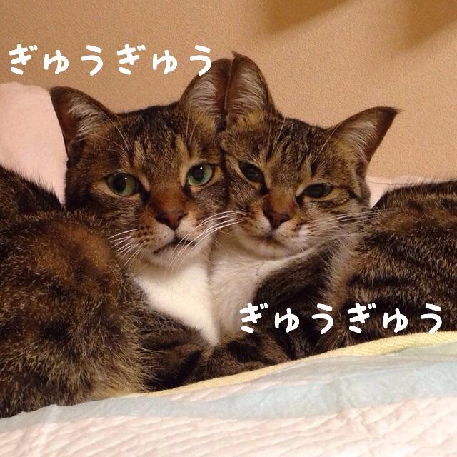 f:id:akiyochan15:20141206031505j:image:w400