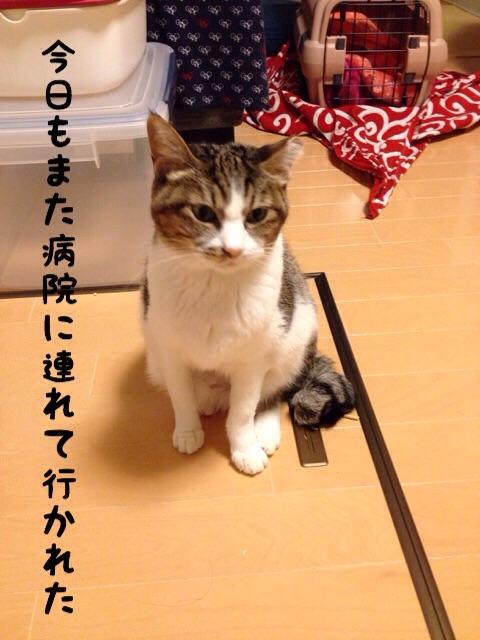 f:id:akiyochan15:20141208235225j:image:w389