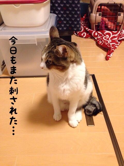 f:id:akiyochan15:20141208235226j:image:w389