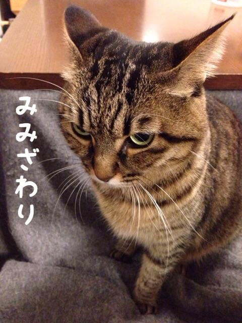 f:id:akiyochan15:20141212205927j:image:w389
