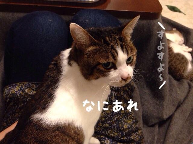 f:id:akiyochan15:20141212205929j:image:w518