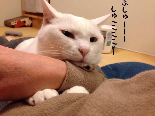 f:id:akiyochan15:20141212211454j:image:w518