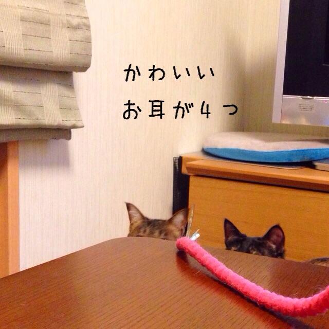 f:id:akiyochan15:20150117000847j:image:w400