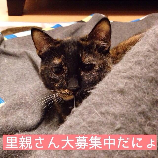 f:id:akiyochan15:20150117171727j:image:w400