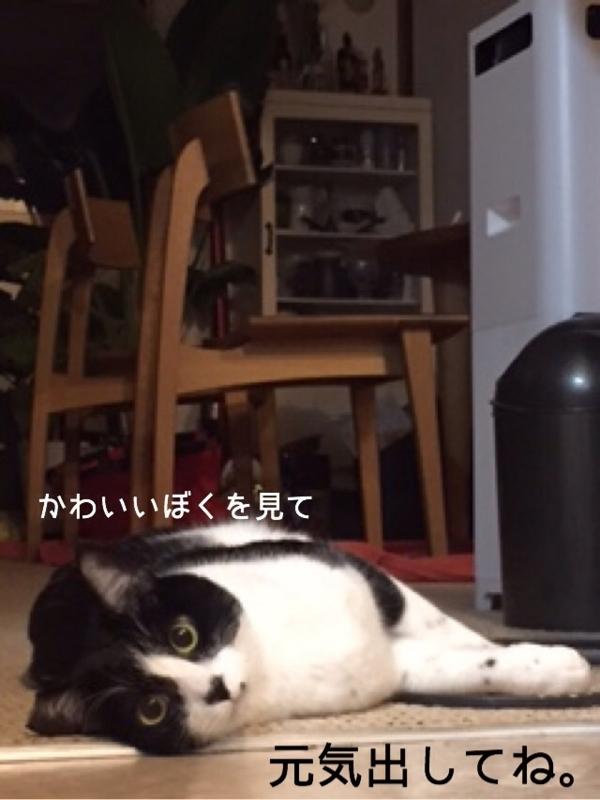 f:id:akiyochan15:20150117192220j:image:w389