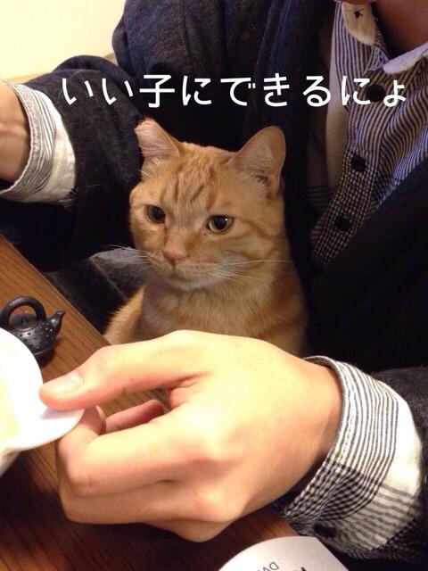 f:id:akiyochan15:20150118140041j:image:w389