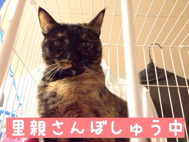 f:id:akiyochan15:20150120125934j:image:w400