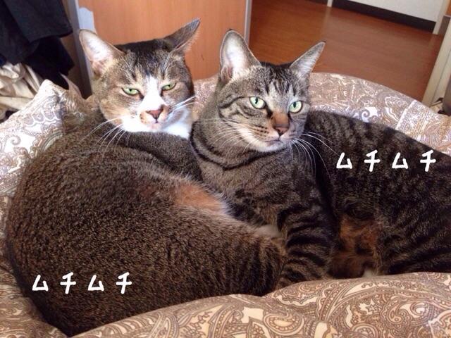 f:id:akiyochan15:20150121153032j:image:w518