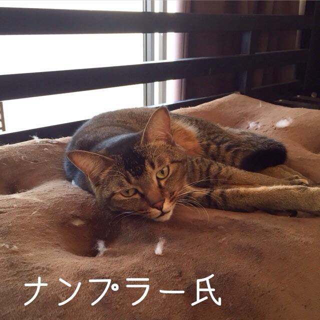 f:id:akiyochan15:20150121160555j:image:w400