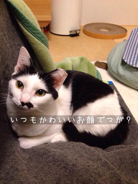 f:id:akiyochan15:20150127194113j:image:w389