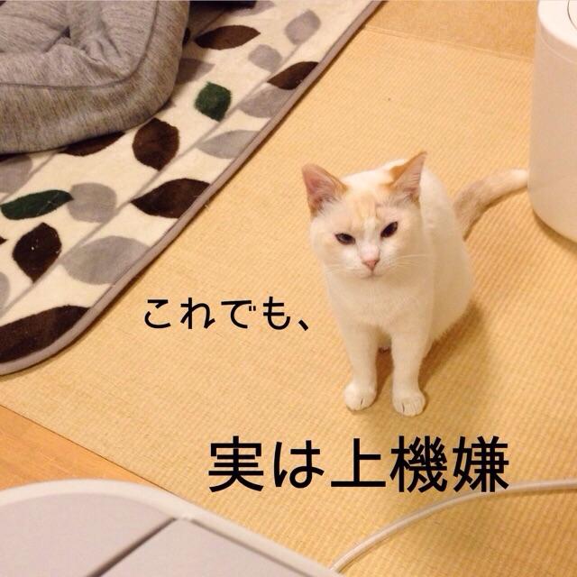 f:id:akiyochan15:20150203211022j:image:w400
