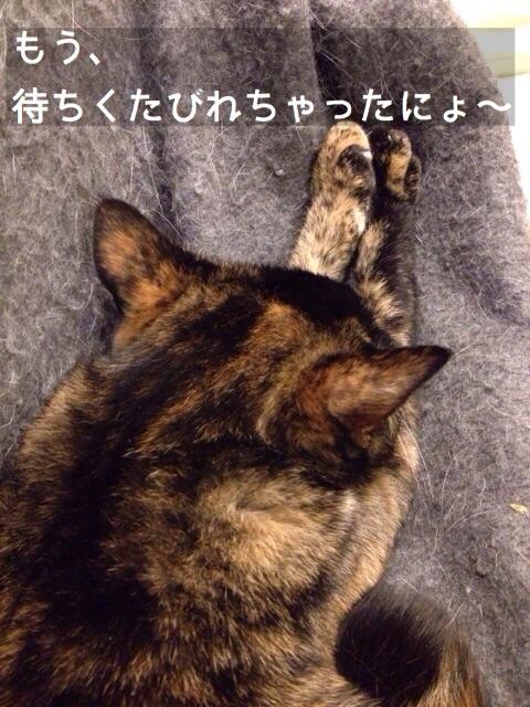 f:id:akiyochan15:20150209193648j:image:w389