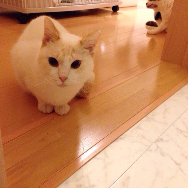 f:id:akiyochan15:20150220124920j:image:w400