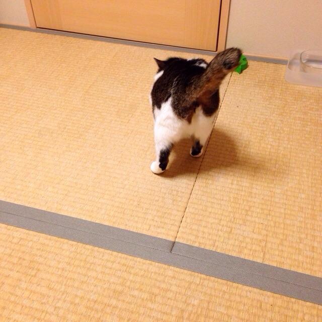 f:id:akiyochan15:20150223165617j:image:w400