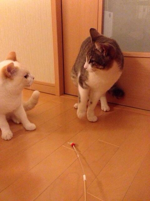 f:id:akiyochan15:20150316123600j:image:w389
