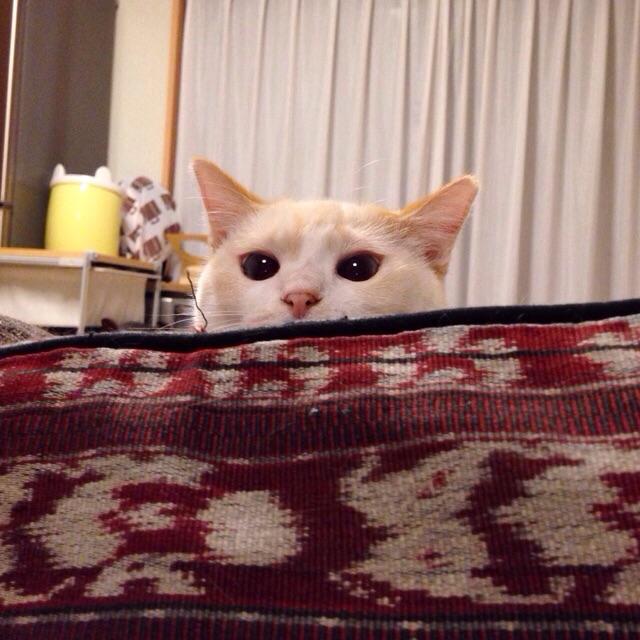 f:id:akiyochan15:20150423114202j:image:w400