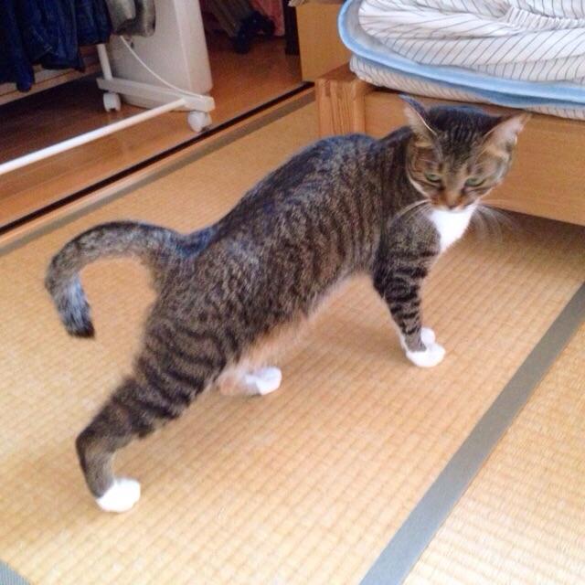 f:id:akiyochan15:20150504165321j:image:w400
