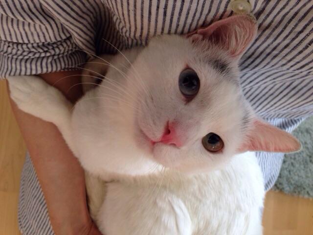 f:id:akiyochan15:20150517151949j:image:w518
