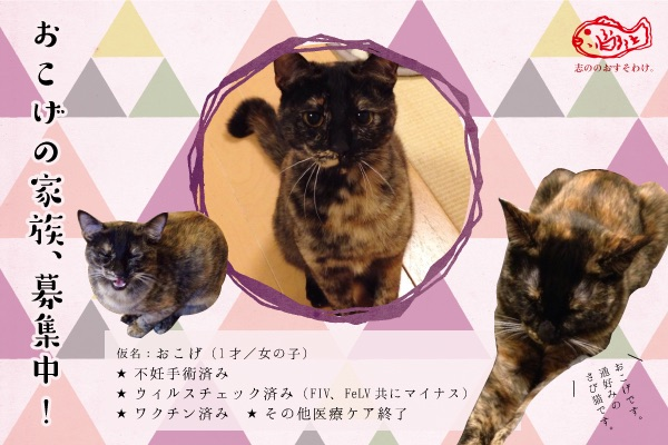 f:id:akiyochan15:20150520162511j:image:w400