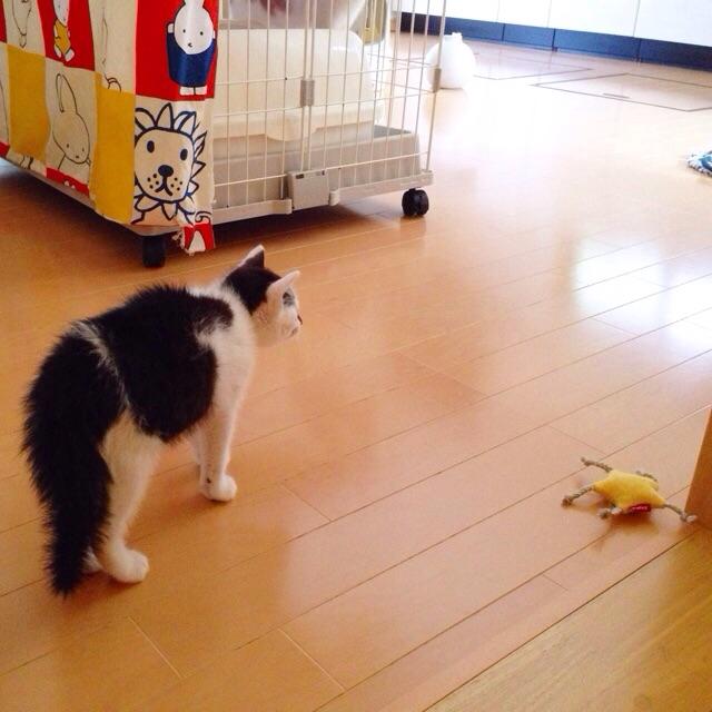 f:id:akiyochan15:20150629121524j:image:w400
