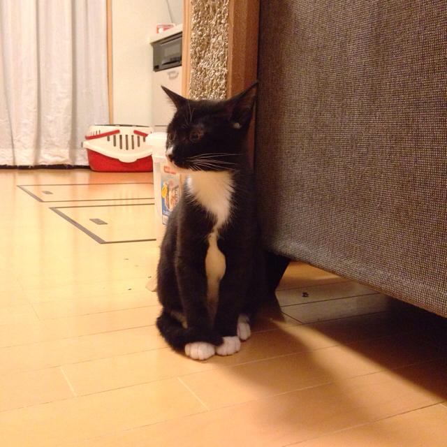 f:id:akiyochan15:20151209123505j:image:w600