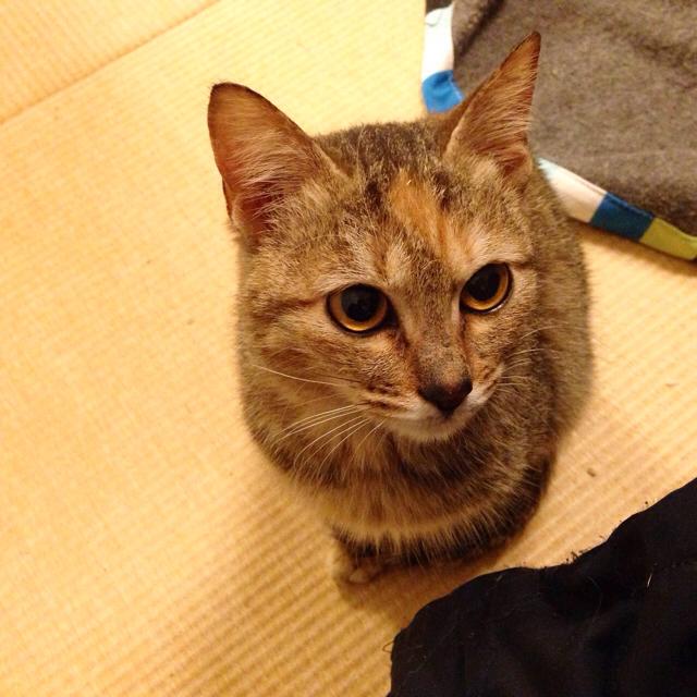 f:id:akiyochan15:20151215124141j:image:w600
