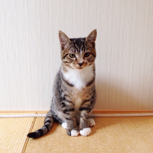 f:id:akiyochan15:20151231233504j:image:w600