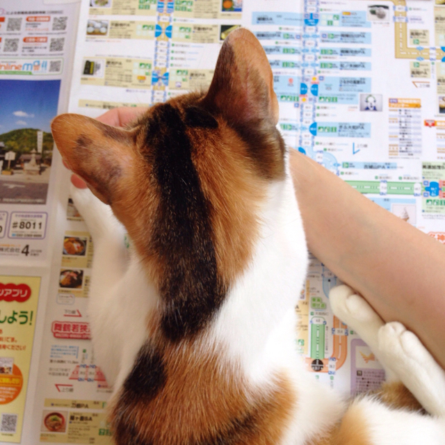 f:id:akiyochan15:20160525164914j:image:w500