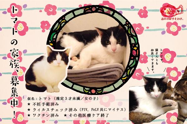 f:id:akiyochan15:20160602131028j:image:w600