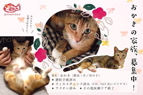 f:id:akiyochan15:20160613163000j:image:w450