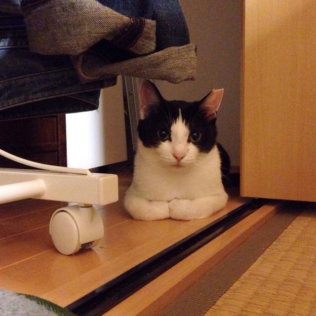 f:id:akiyochan15:20160701145611j:image:w500
