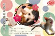 京都 猫 里親
