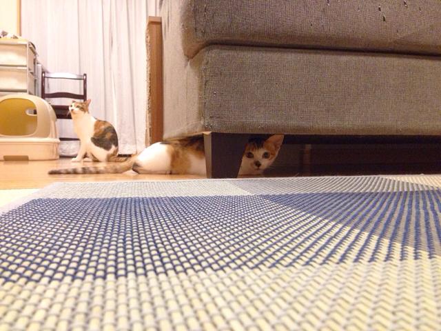 f:id:akiyochan15:20160919134316j:image:w518