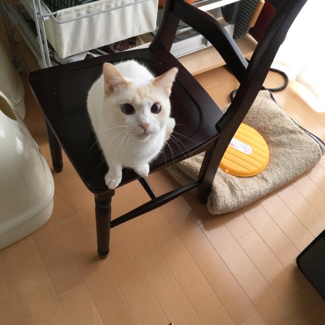 f:id:akiyochan15:20170111164026j:image:w400