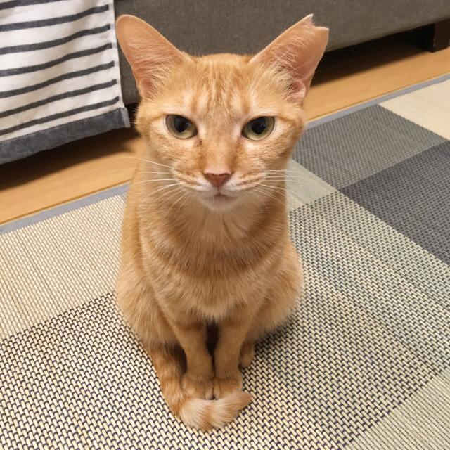 f:id:akiyochan15:20170718153021j:image:w450