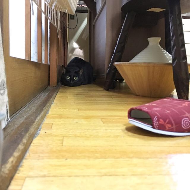f:id:akiyochan15:20170813030708j:image:w500