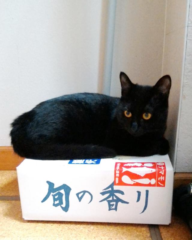 f:id:akiyochan15:20170815190445j:image:w400