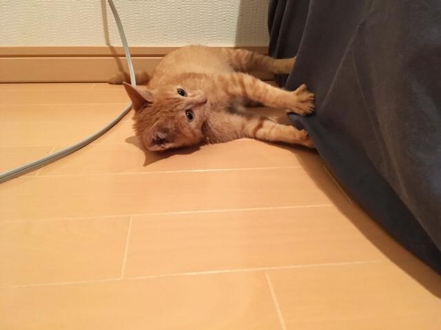 f:id:akiyochan15:20171113180127j:image:w518