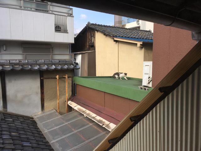 f:id:akiyochan15:20180319125723j:image:w518
