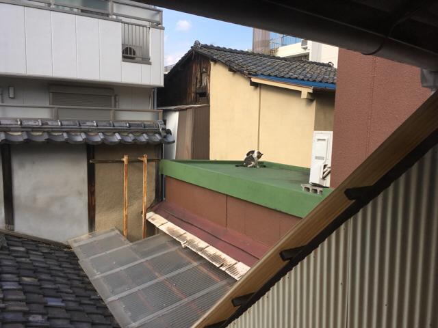 f:id:akiyochan15:20180319125726j:image:w518