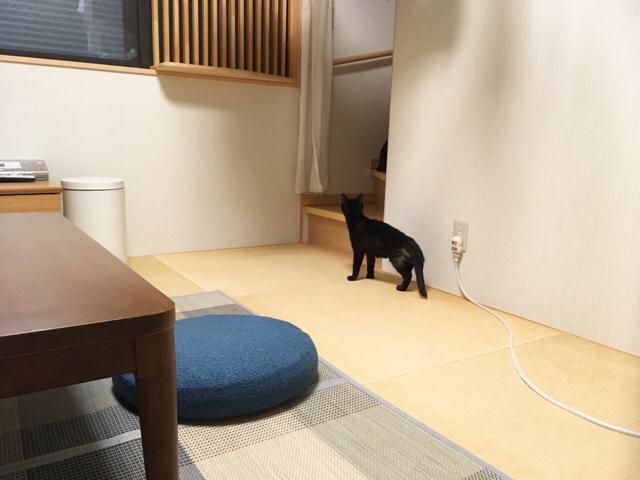f:id:akiyochan15:20180913123328j:image:w518