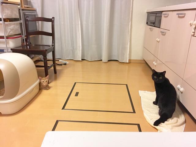 f:id:akiyochan15:20181019114845j:image:w518