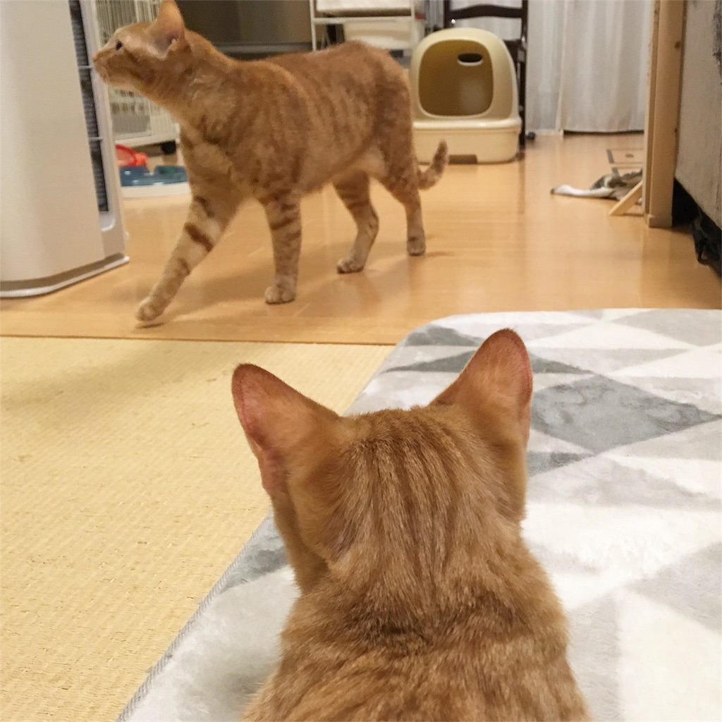 f:id:akiyochan15:20181114225018j:image