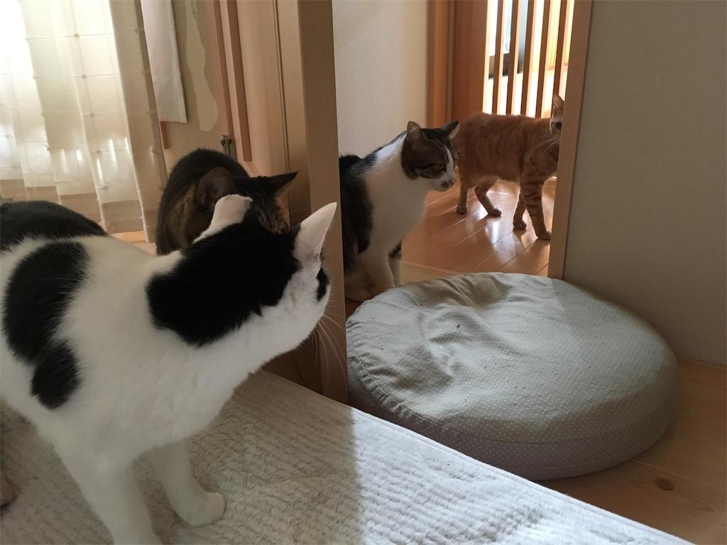 f:id:akiyochan15:20181221162837j:image
