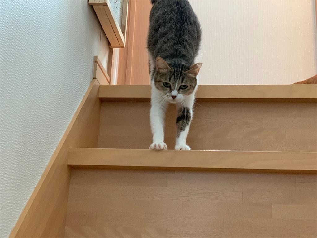 f:id:akiyochan15:20200322143230j:image
